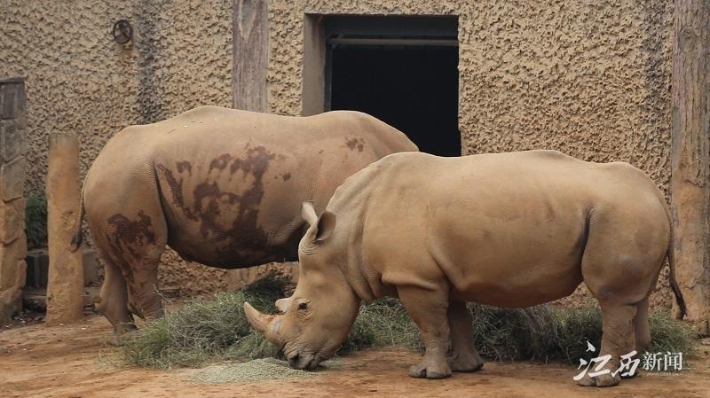 """江西新闻客户端讯:""""十一""""来南昌动物园 游客可近观五类珍稀动物"""