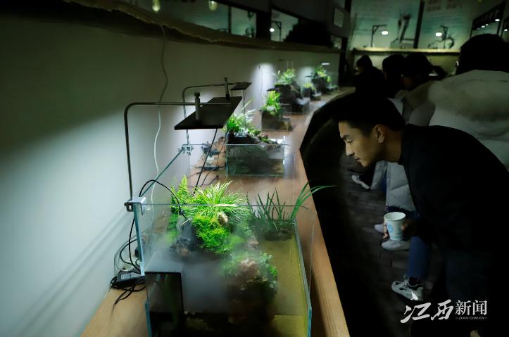 """植物新宠儿!融媒体看江西采访团探访""""天下第一草"""""""