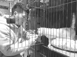 上饶:宠物店店员给寄养的猫喂食