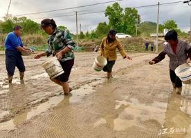 沙地镇: 千亩双季稻集中育秧基地开播