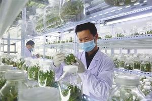 横峰:科研人员正在监测铁皮石斛芽苗繁育情况