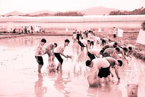 于都县水头中学380余名学生正在插秧