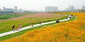 家门口的风景!南昌马兰圩湿地200亩花海引客来